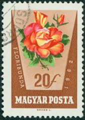 stamp printed in Hungary shows rose