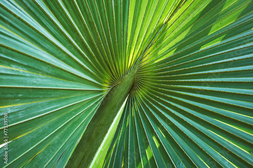 Fotobehang Textures palm leaf structure