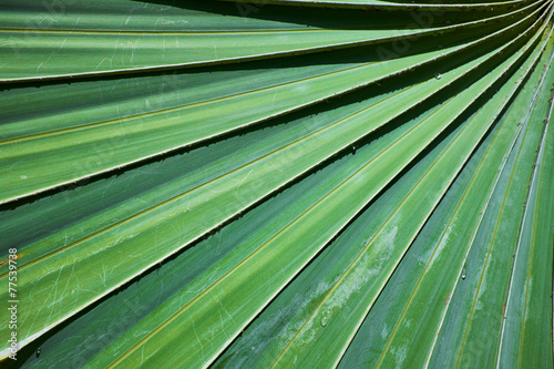 palm leaf structure