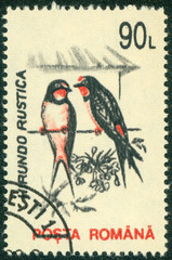 stamp printed in Romania, shows the Barn Swallow