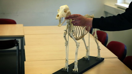 Shot of a man petting skeleton of a dog