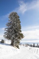 Winter Landscape At Mt. Dobratsch