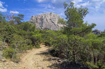 The trail in a mountain forest. Crimea.