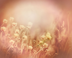 Meadow flowers and grass - yellow flowers