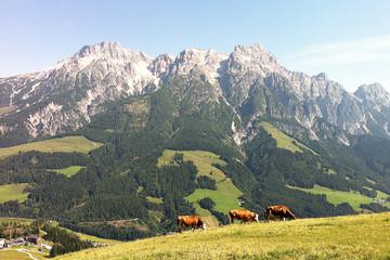 alm panorma kühe sommer berge schön urlaub ländlich