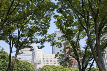 office buildings and green trees