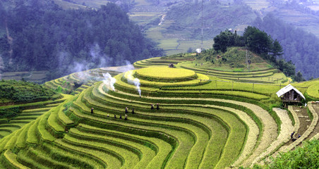 terraced rice fields with water in Mu Cang Chai