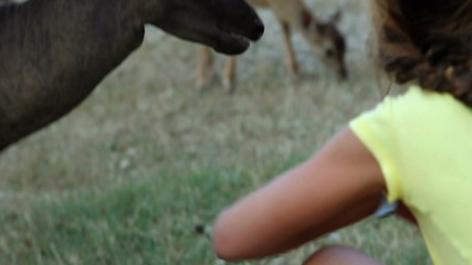 HD1080p: Small girl is caressing and feeding a deer