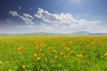 cloudscape,meadow and wildflowers in spring