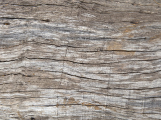 texture of decayed timber, old wood surface background