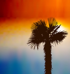 Tropical background with palm tree at sunset