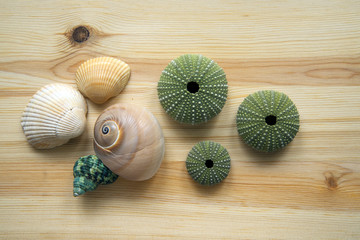 shell and sea urchins on wooden cutting board