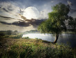 Willow and moon - 77551531