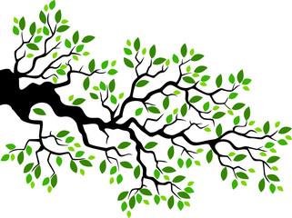 Green leaf tree branch illustration