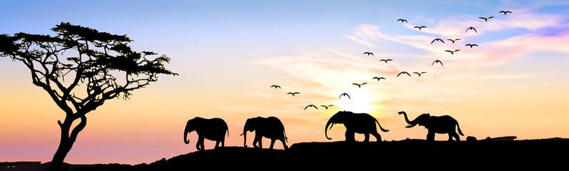el desfile de los elefantes por el monte