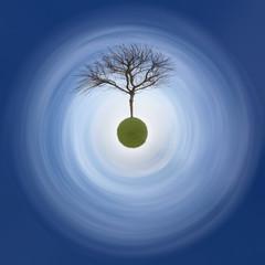 arbre champs ciel bleu nature tronc culture