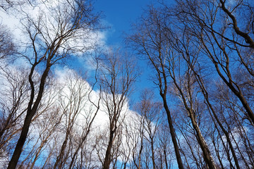 Branches of trees against the blue cloudy sky
