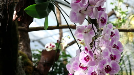 Growing blossom orchids on trees