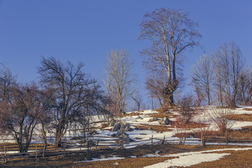 Leafless trees landscape with melting snow