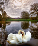 swan scenic