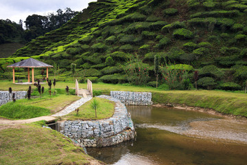 Arbor and riverside at tea plantation - green hills covered with