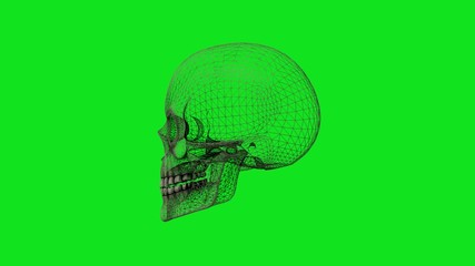 Skull rotate on green screen