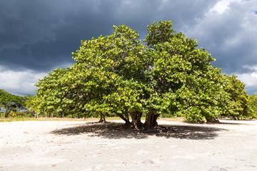 Baum auf weißem Sandboden