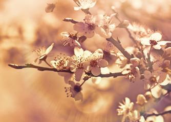 Soft focus on blooming - flowering
