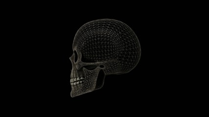 Human skull Alpha Matte rotating seamless loop