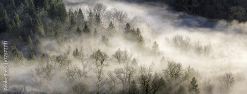 Fog Rolling Over Forest in Oregon - 77572731