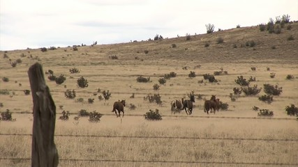 Vast prairie with horses behind the fence. Longest bicycle competition over United States of America - RAAM in 2009.