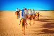 Tourists on camel