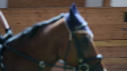 close up on horse in big hall training