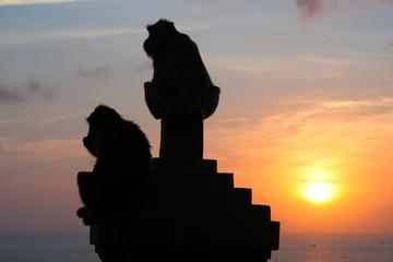 Monkeys at Uluwatu temple, Bali Indonesia.