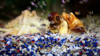 Close up shot of a snail house on the bottom of the fish tank