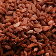 Rice grains on pale close up