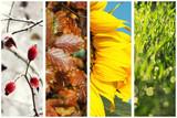 Four seasons collage: Spring, Summer, Autumn, Winter