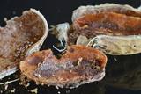 Aflatoxine einer Erdnuss poster