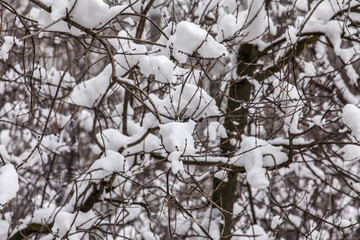 The tree branches in park covered with snow after a blizzard