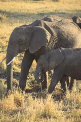 Elefanti nel Parco Masai Mara