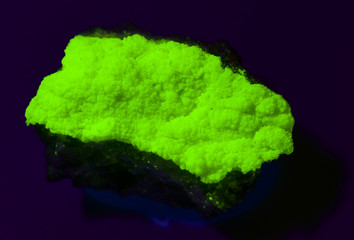 Uranium ore (meta-autunite) from Portugal under UV light. 4cm.