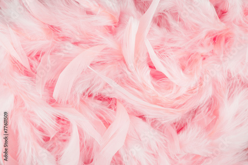 Pink feathers background - 77601509