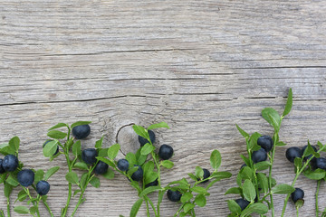 Bilberry branches with berries on old wooden background