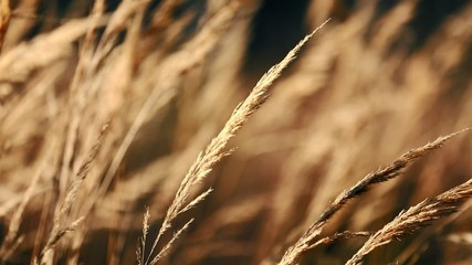 forest grass, sepia