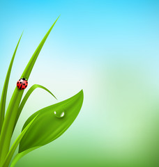 Green grass, plantain and ladybug on blue sky. Floral nature spr