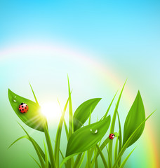 Green grass, plantain and ladybugs with sunrise and rainbow on b