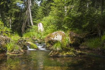 Seebach der in den Stausee Schwarzenbachtalsperre mündet, Forba