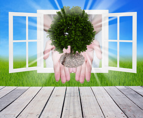 tree  in the hands with window ,concept of ecology