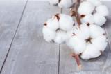 Fototapety Cotton plant bud