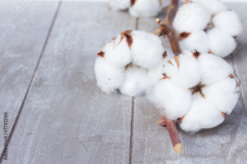 Cotton plant bud